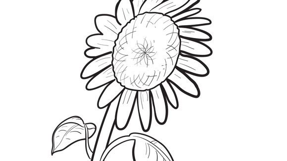 gallery for gt simple sunflower coloring pages