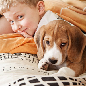 10 best dogs for kids for Best dogs for companionship