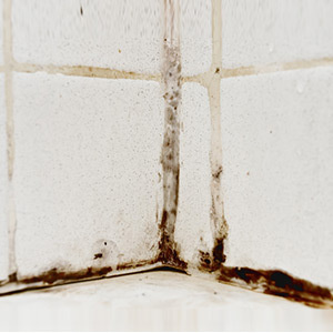 Mold In Shower Make You Sick is your bathroom making you sick? - grandparents