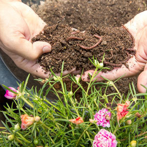 Attract Earthworms To Your Garden