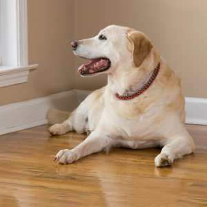 Best Ways To Remove Pet Hair From Your Home Grandparents Com