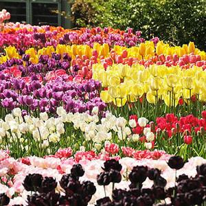 11 best u s botanical gardens - Brooklyn botanical garden admission ...