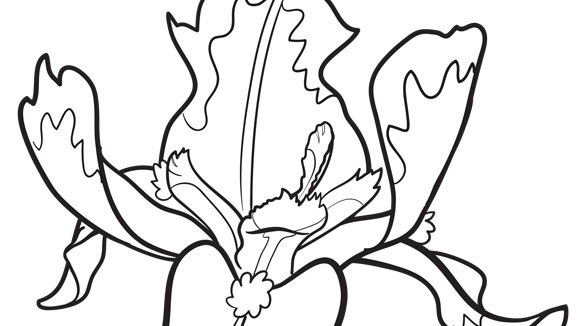 iris coloring pages - photo#10
