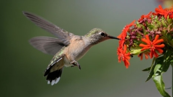 Of All The Birds In The Garden, I Think My Grandchildren Love The  Hummingbirds The Most. The Fearless Little Hummers Think Nothing Of Flying  Close To ...