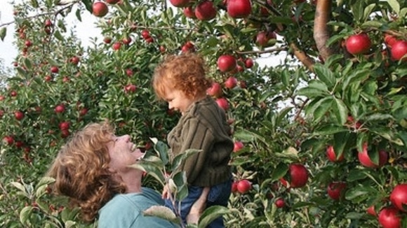 Apple Picking Coloring Pages : Fall activity apple picking grandparents