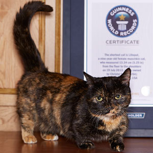 smallest cat in the world guinness records adjudicator rob - Smallest Cat In The World Guinness 2014